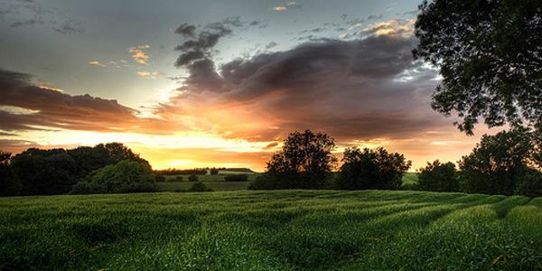 open-field-sunset